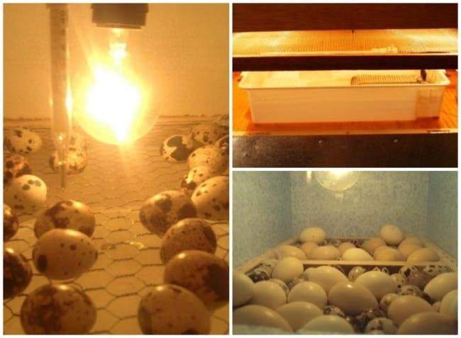 como fazer chocadeira de ovo caseira