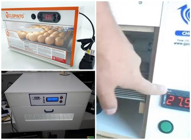 chocadeira de ovo com ajuste de temperatura