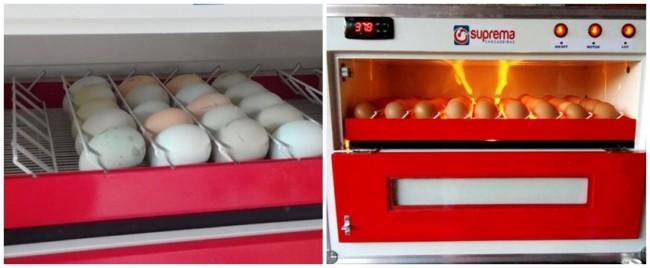 chocadeira com viragem automática dos ovos