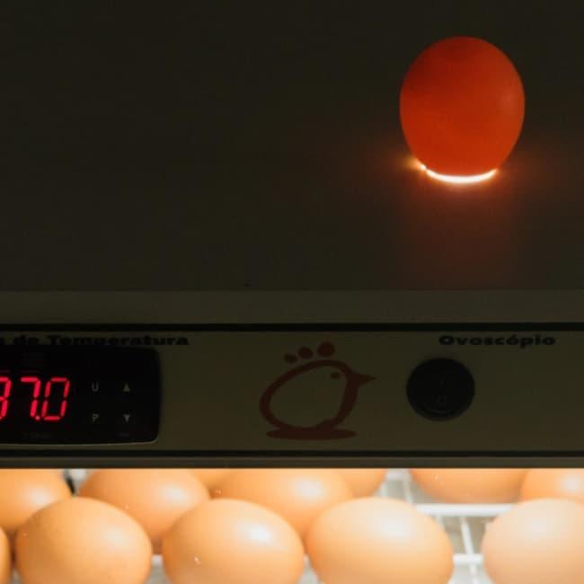 chocadeira de ovos com ovoscópio