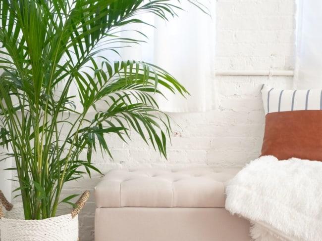 Areca Bambu na decor da sala
