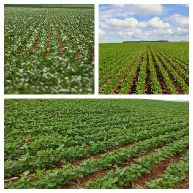 Plantações de soja