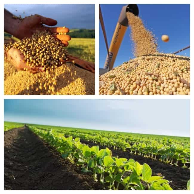 Plantar soja
