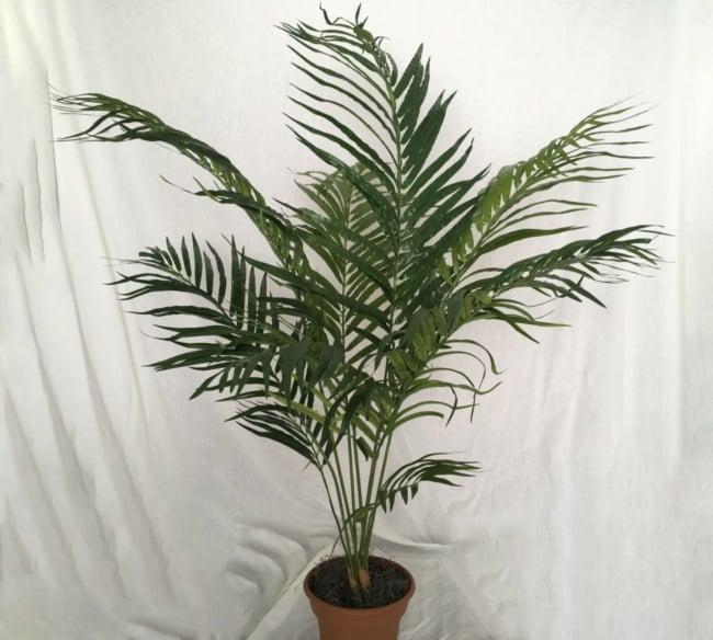 como decorar com Areca Bambu