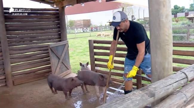 como montar Chiqueiro de porcos passo a passo
