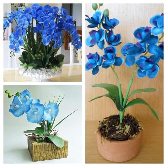 decoração com orquídea azul