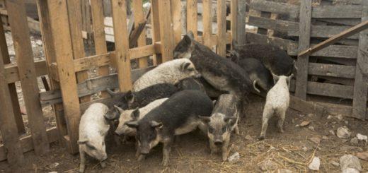 ideias de Chiqueiro de porcos