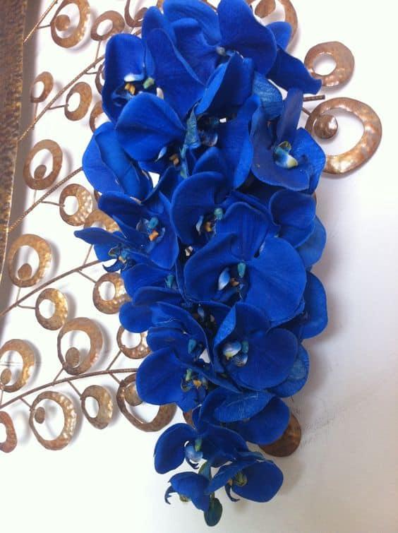 modelos de Orquídea Azul