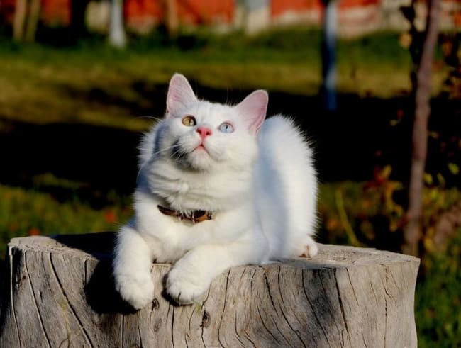 nomes engraçados para gatos dicas