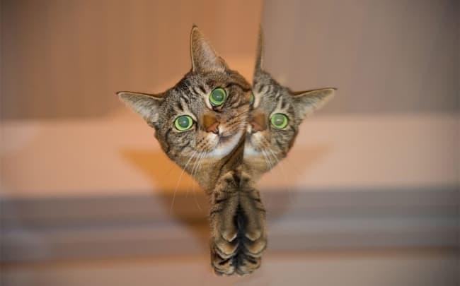 nomes engraçados para gatos lindos