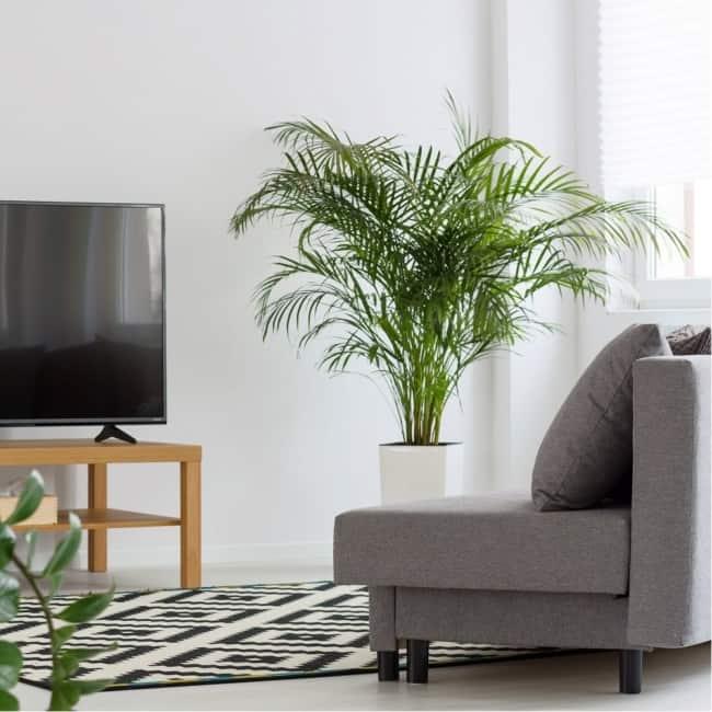 sala de estar com ARECA