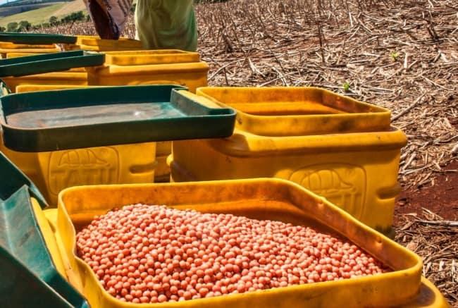 sementes de soja