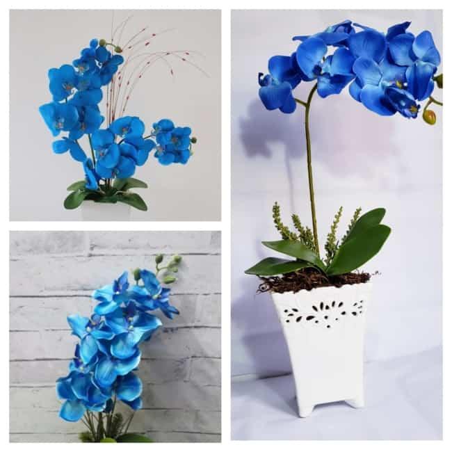vaso de orquídea azul