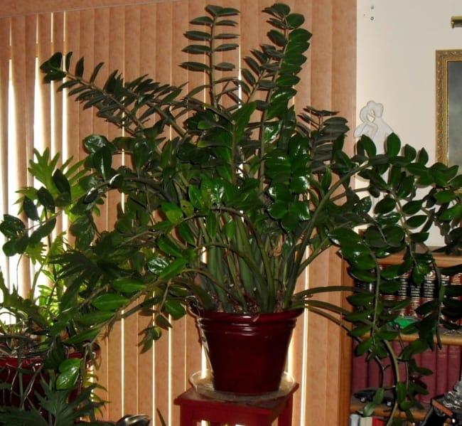 É uma das plantas de sombra que não precisa de manutenção recorrente