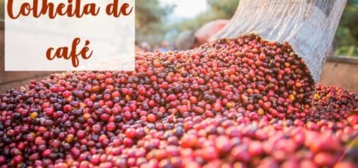 colheita de café