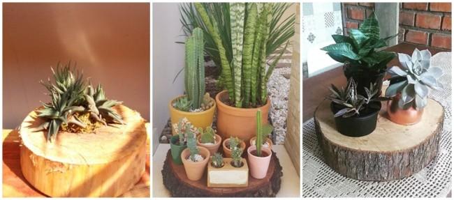 bolacha de madeira com plantas