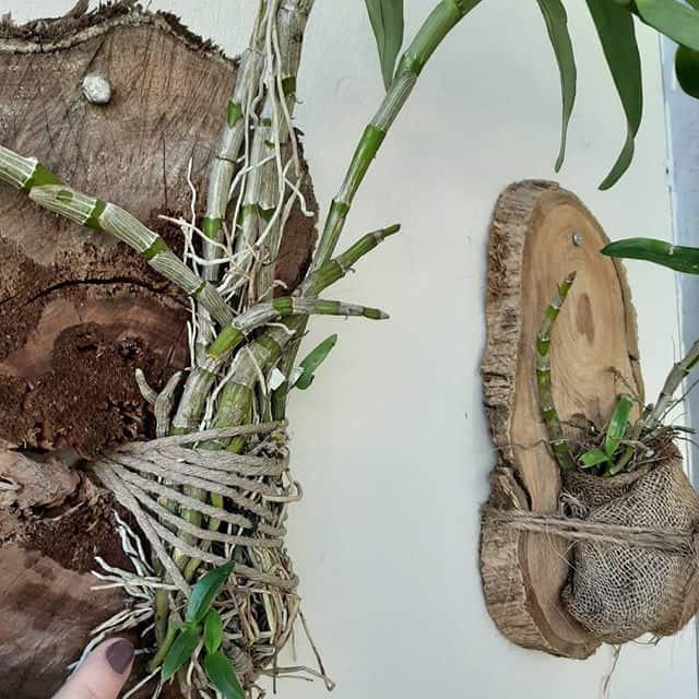bolacha de madeira na parede com orquídeas