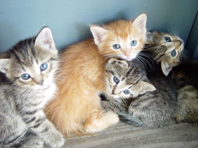 Como escolher nomes de gatos
