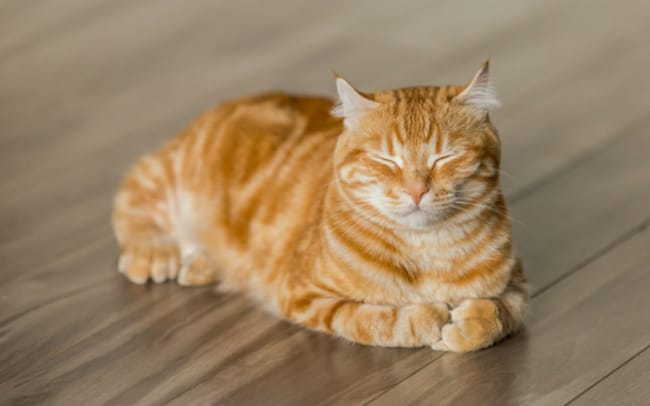 Dicas de nomes para gatos laranjas