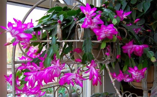 Flor de maio é uma linda opção e trás vida para o lugar