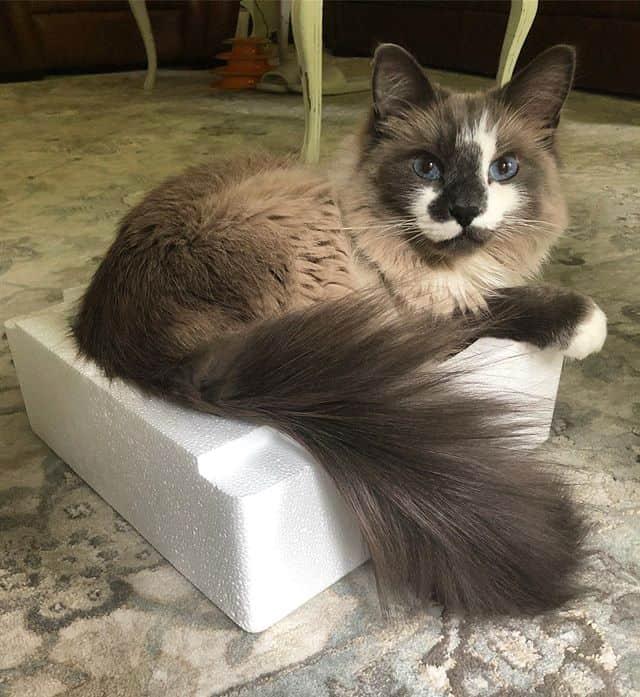 Mochi the cat