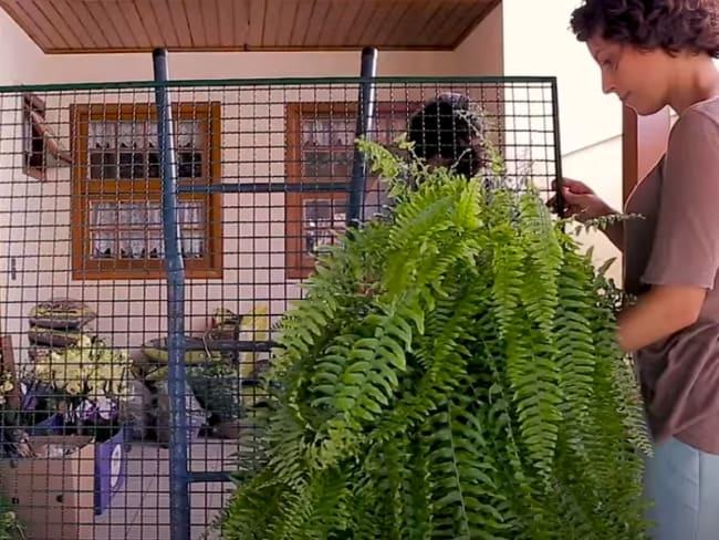 Montando um jardim vertical com samambaia americana