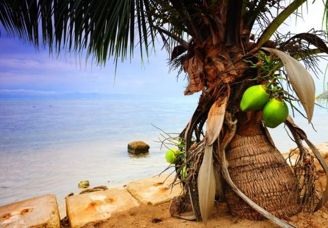 Paisagismo com coqueiro anão na praia