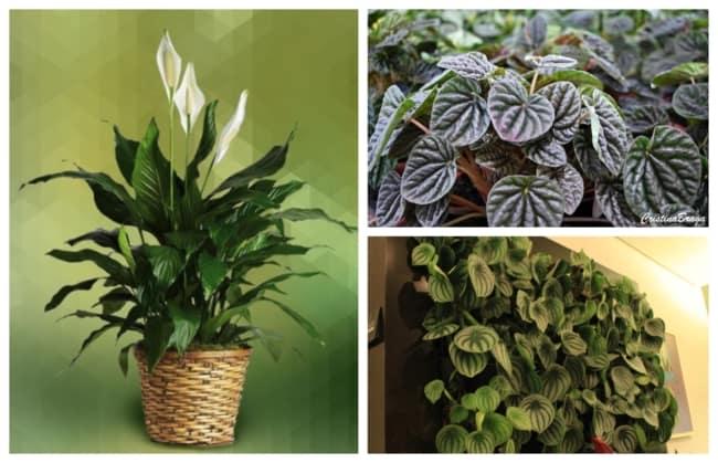 Plantas de sombra 1