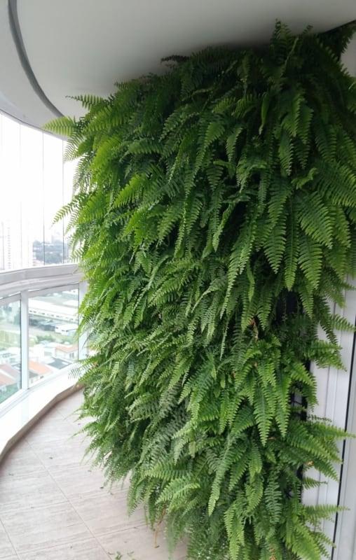 Plantas de sombra são um charme especial ao jardim vertical
