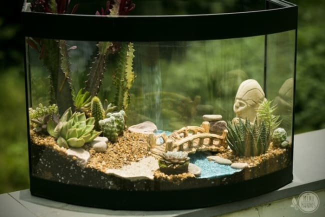 Terrário de suculentas em aquário