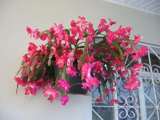 Você pode escolher um lugar especial na casa para abrigar a flor de maio