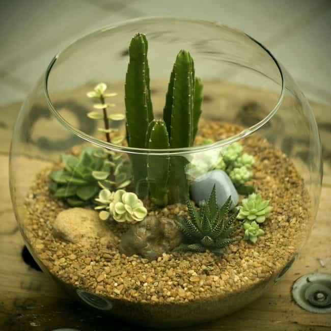 aquario de Terrário de suculentas