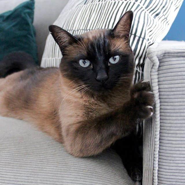 cola cat