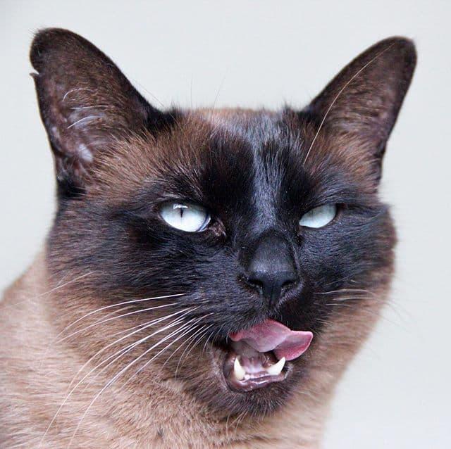 cola gato