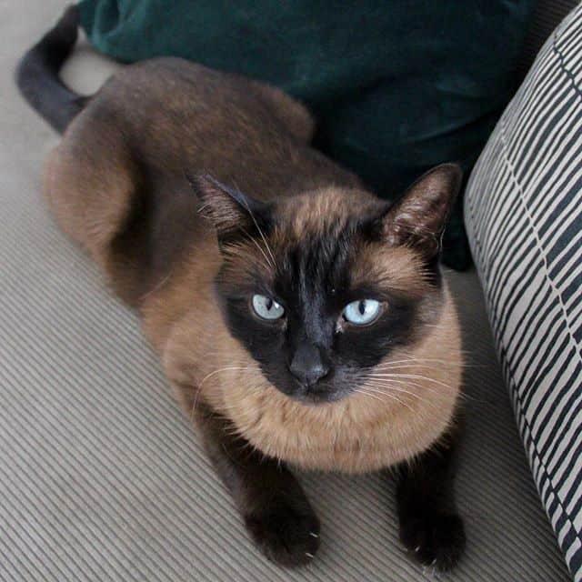 cola the cat