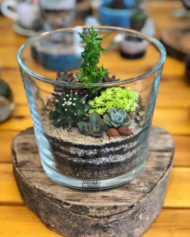 dicas de Terrário de suculentas em vidro