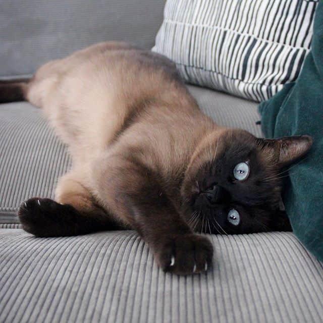 gato cola the cat
