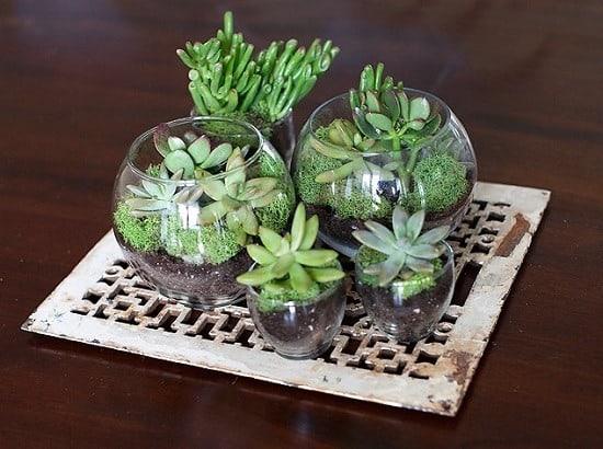 ideias de Terrário de suculentas em vidro