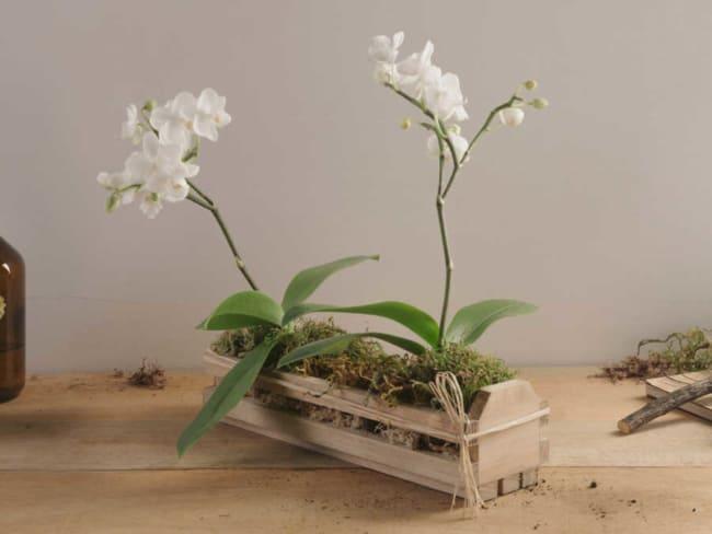 mini orquídeas branca em vaso de madeira