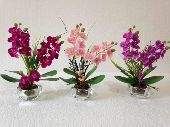 mini orquídeas em vaso de vidro