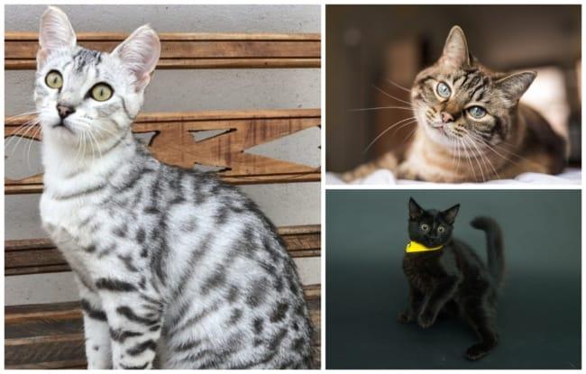 nomes para gatos 1