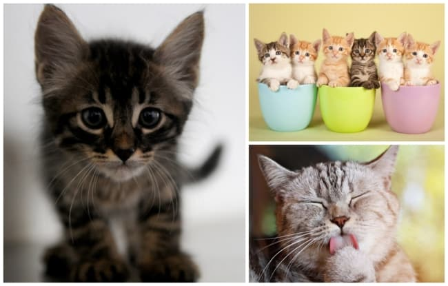 nomes para gatos 2