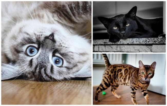 nomes para gatos 3
