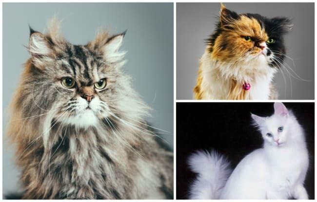nomes para gatos 4