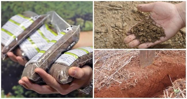 dicas de solo para cultivo de soja de qualidade