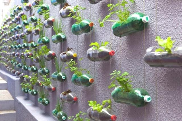 muro chapiscado com horta vertical