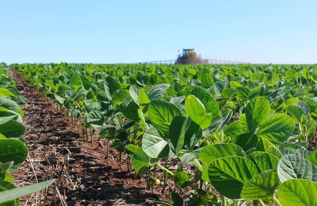 dicas para plantar soja