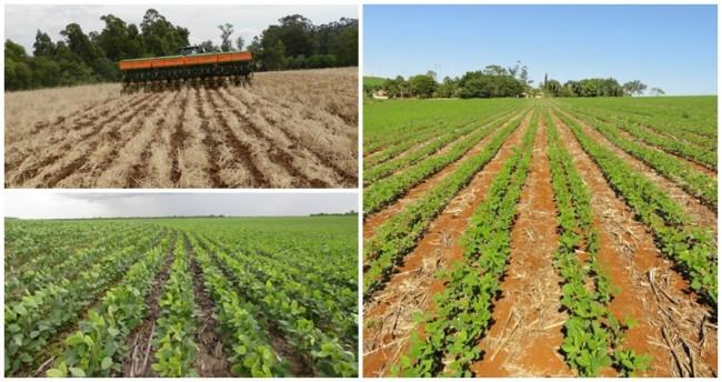 dicas de espaçamento para ter sucesso no plantio de soja