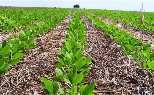 tipos de plantio para soja