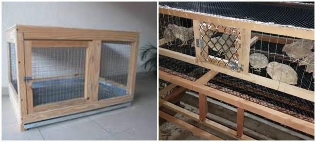 dicas para construir gaiola caseira para codornas